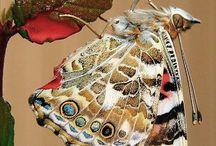 Butterfly love  / by Allison Troxel