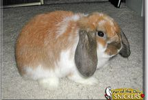 Rabbits / Rabbits and bunnies from PetoftheDay.com / by Pet of the Day