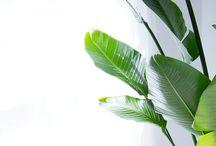 Plantporn