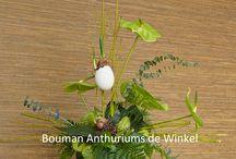 Pasen met anthuriums / Een gezellig en feestelijk Pasen met mooie anthuriums uit de Winkel.