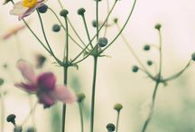 Flowers / What, where, when and how to grow flowers...