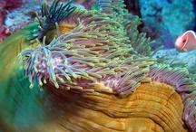 Sea Creatures / by Leticia Mazariegos