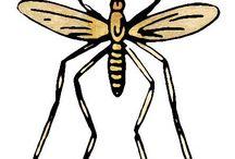 mosquito traps.