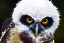 Owl-Fractal