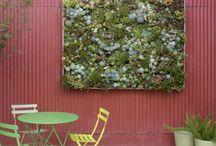 Tableaux de succulentes