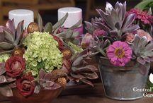 Flower arrangements / Flower arrangements with local flowers and even succulents.