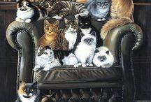 Kočky / Kočky kolem nás