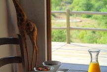 Mbizi Bush Lodge / Safari in South Africa outside