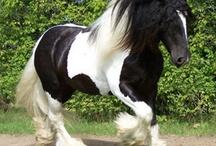 Pony Poweeerrr / PAARDEN