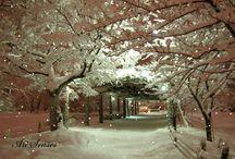 Snow Falling Screen Savers