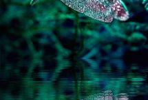 trollsländor