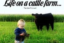 Our farm / by Jessica Thomas