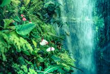 Flickr: Nature