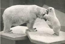 Animal Postcards / Animal postcards through the ages