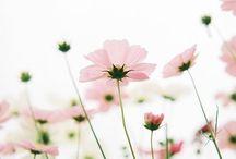 Toef Wonen loves flowers