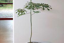 Nature & Plantes