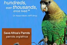 Save Africa's Parrots / Many populations of parrots are threatened with extinction. In Africa the problem is particularly urgent - parrots there face an increasing number of threats, from harvesting for the wildlife trade and habitat loss, to disease and persecution as crop pests. The World Parrot Trust is focusing its attention on their plight, and we need your help!