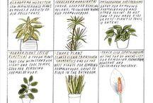 bringing outdoors IN / by Julie Horner-Amegashie