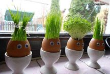 Things to do with egg shells