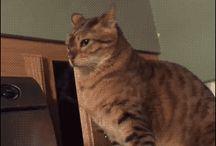 Kociaki z ukrytej kamery
