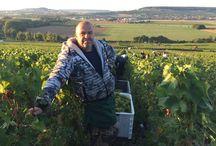 vendanges 2015 / pinot noir, chardonnay, meunier cueillette, pressurage....