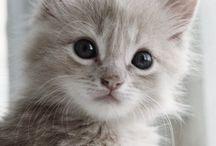 Kittens...Cats