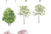 Кроны деревьев и кустов