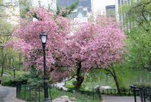 Cherry Blossom love!