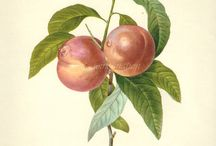 PRINTS: Botanical, Floral, etc. / by Diane Cabral