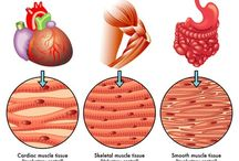 Muscles n tissue