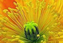 Flowers & plants / by Lyn Goold