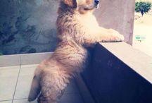 canin lupus familiaris