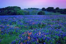 "Texas Hill Country: Wildflowers & Wildlife / The Texas Hill Country becomes a rainbow of magnificent colors every spring as over 48 species of wildflowers grace the landscape. The wildflower season opens in March through May. Just as impressive is the abundant wildlife that calls our area ""home."" Texas longhorns graze amid rolling pastures and white-tailed deer can been seen around just about every corner. Look to the trees and sky to spot some of our more than 240 avian species, including peregrine falcons and bald eagles."