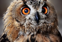 Owls / Owls / by Karla Grimes