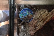 Reptiles and creepy crawlies / All things reptile and creepy crawly from our Pet store Not Just Pets