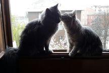 miei gatti
