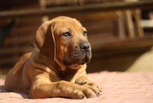 Dog Training Tips & Tricks