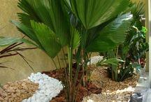 palmeira planta