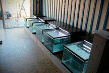 Fishspa Aquarium