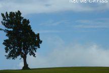 Arbres  / Arbres remarquables, arbres étonnants, arbres rencontrés un jour