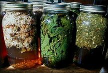 Herbal Infusions/Herb Uses / by Jayme Weller