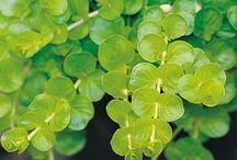 tuinideeen-planten
