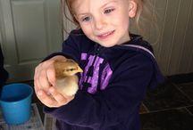 Easter Holidays at Cwmcrwth Farm / Easter at Cwmcrwth Farm lambs kids chicks and piglets