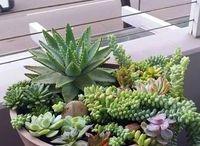 Plantas, cactos e etc