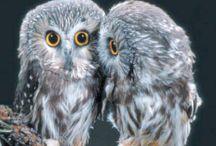 owls / by Cordelia Shirley