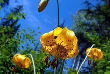 3d Nature flower wallpaper