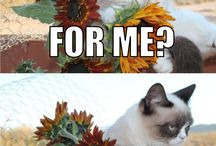 Grumpy Cat / by Brenda Reed