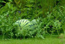 HOW TO GROW VEG/FRUIT