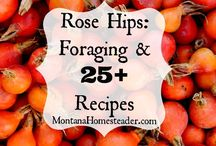 Rose Hip-sters