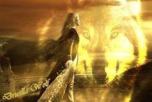 wolf-vlčí smečka
